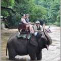 Elephant Safari Tour